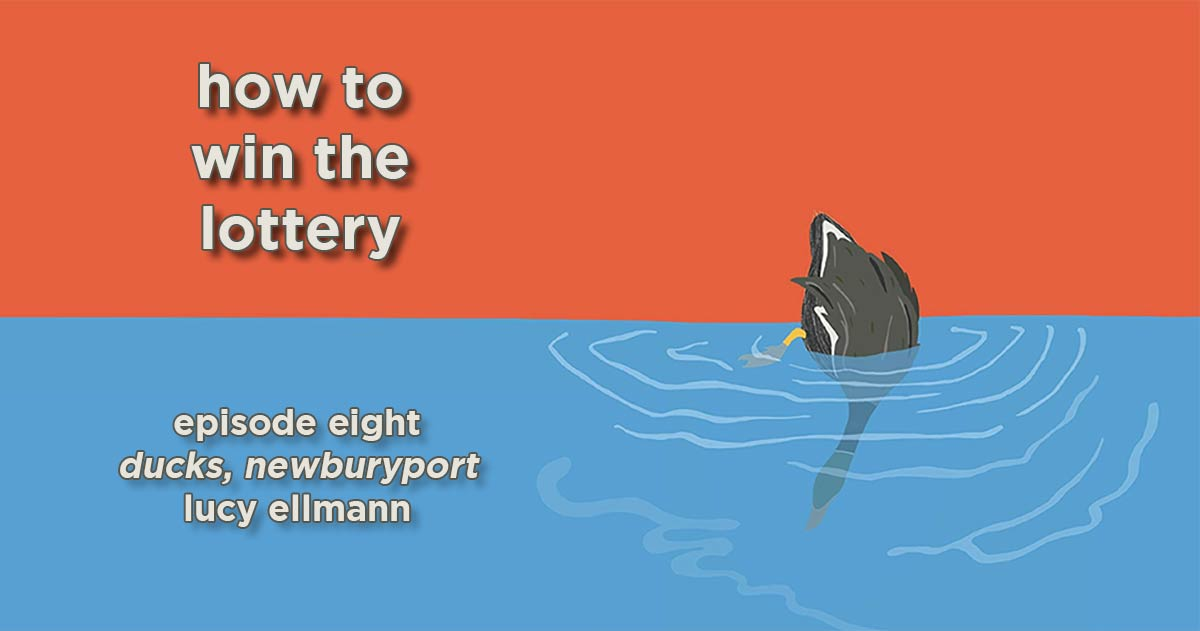 how to win the lottery #008 – ducks, newburyport by lucy ellmann